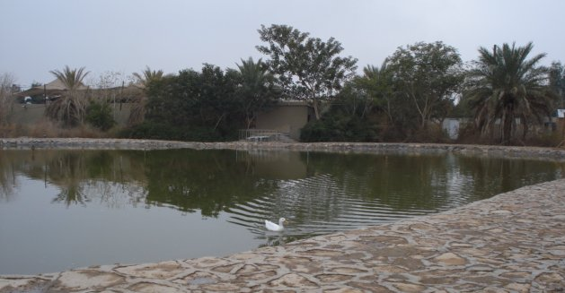 Duck pond in Fallujah