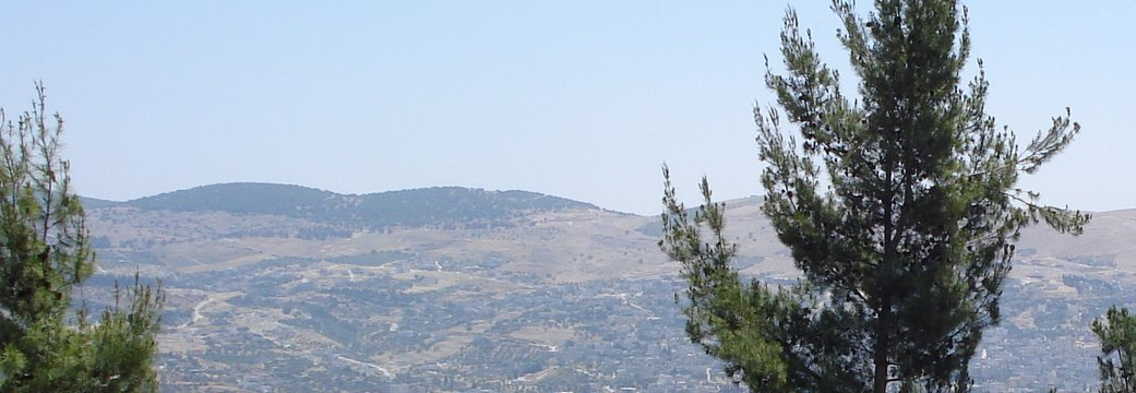 Pine trees in Ajloun Jordan