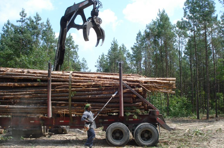 Triming the load of loblolly pine