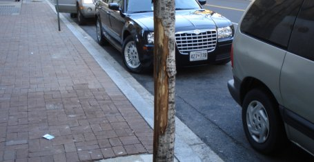 Dead trees on C St SW killed by vandalism