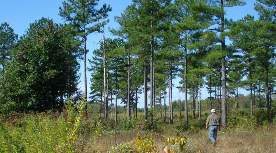 Open woods providing good wildlife habitat on farm in Virginia