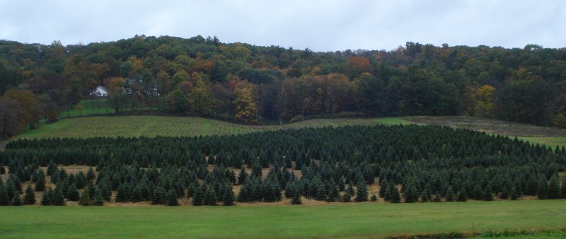 Pennsylvania tree farm