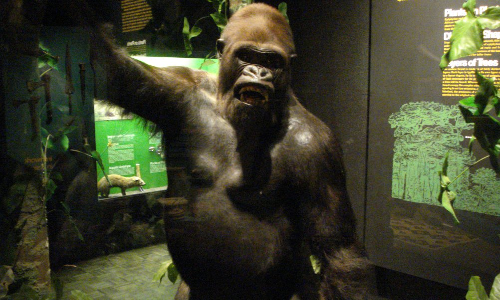 Gorilla exhibit at Milwaukee Museum