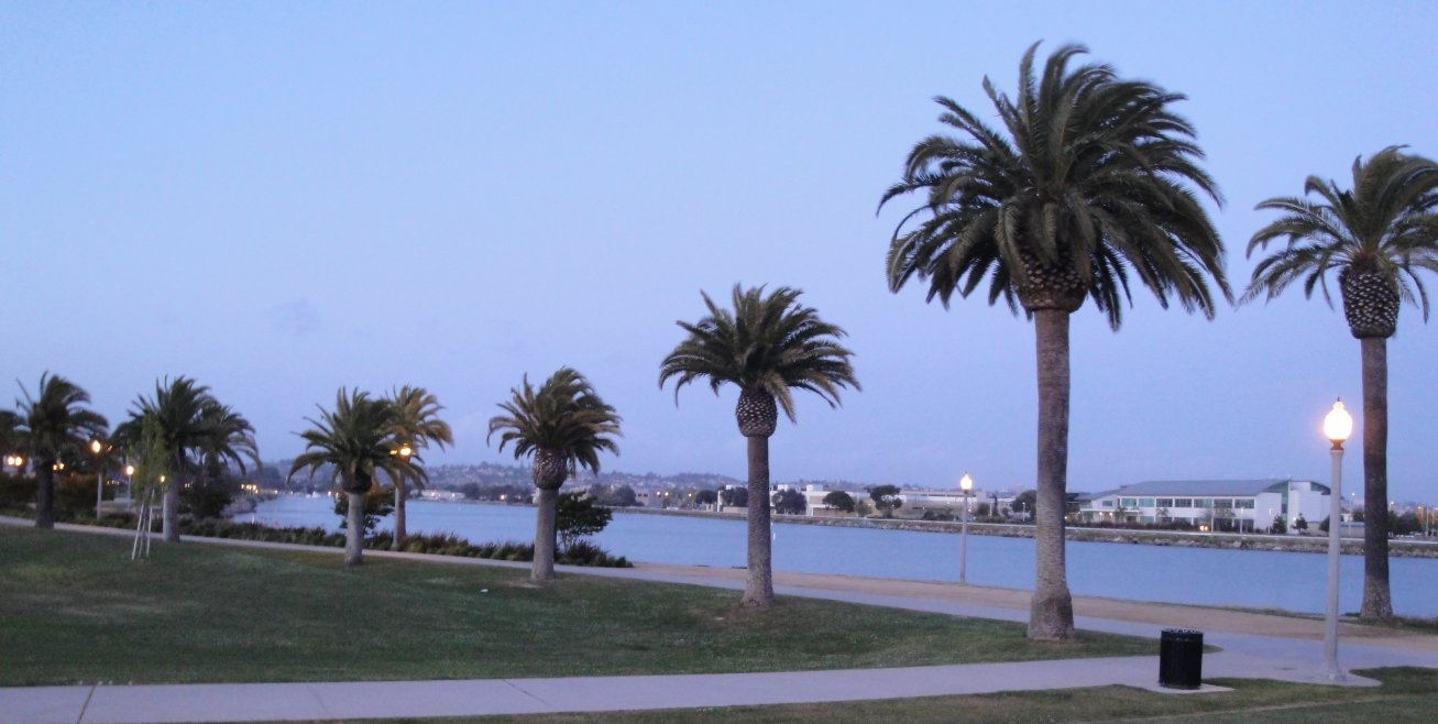 Liberty Station palms in San Diego
