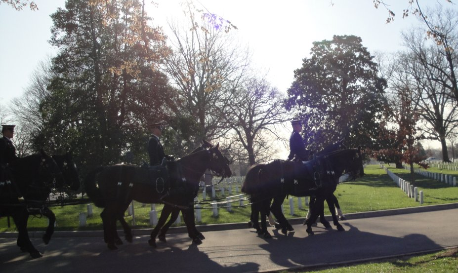 Horses pulling caison in Arlington Cemetary