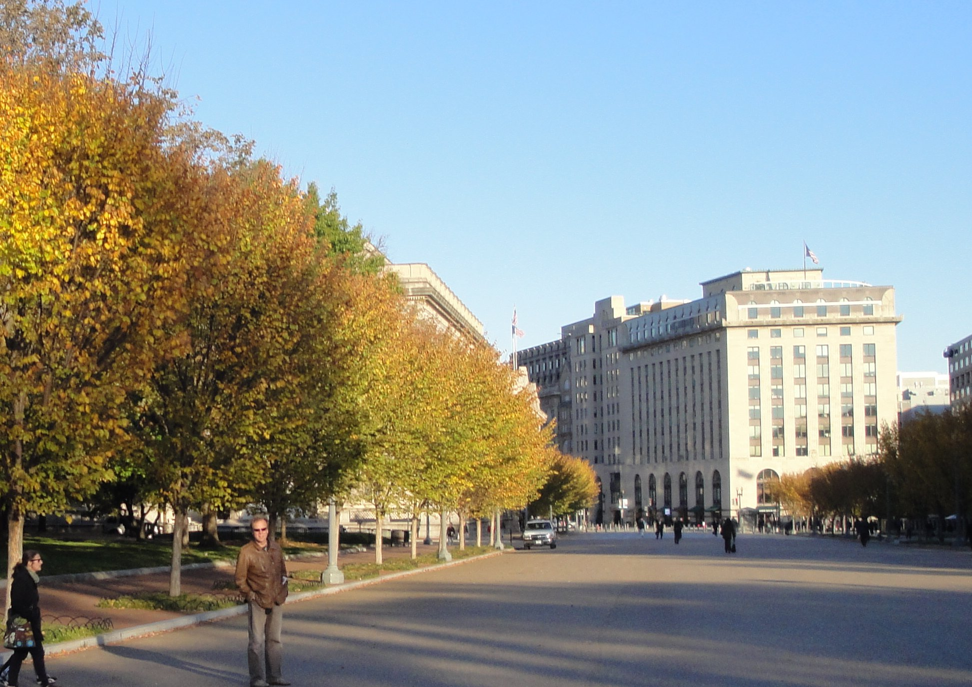 American elms on Pennsylvania Ave across from the Whithouse. These are the new Princeton elms, which are resistant to the deadly Dutch elm disease