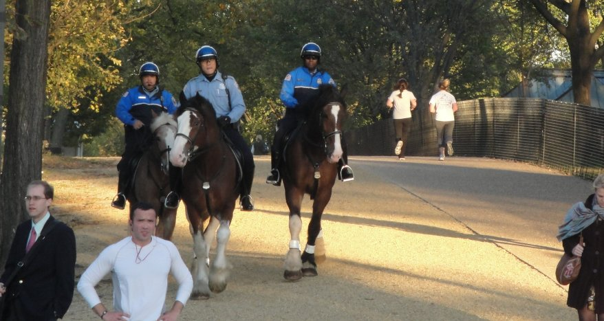 Horse cops patrolling the Mall on Clydesdales