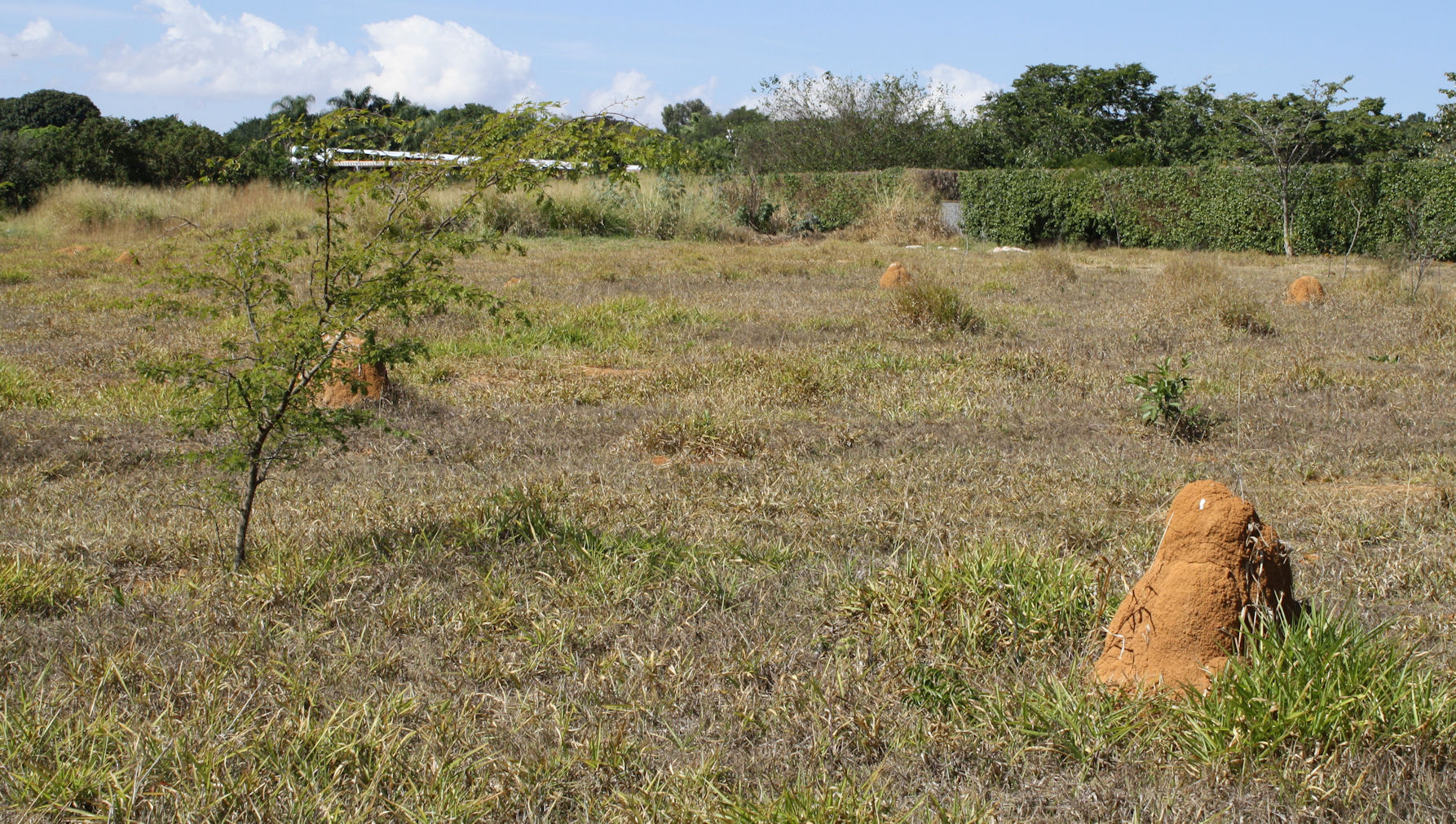 Termite_mounds_in_Brasilia.jpg