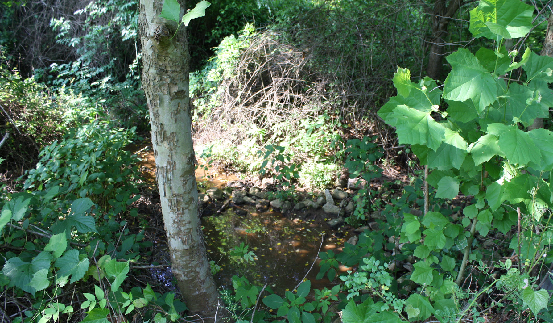 http://johnsonmatel.com/2011/June/forestry/Stream1_with_sycamore.jpg