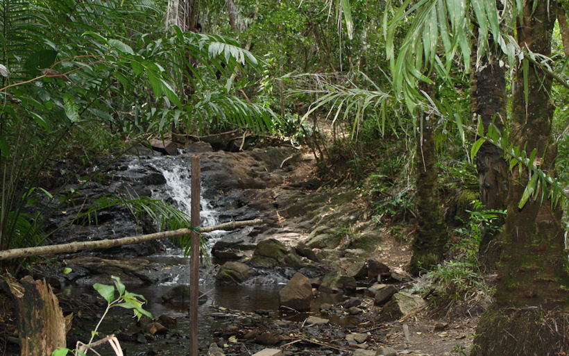 Stream in Atlantic forest