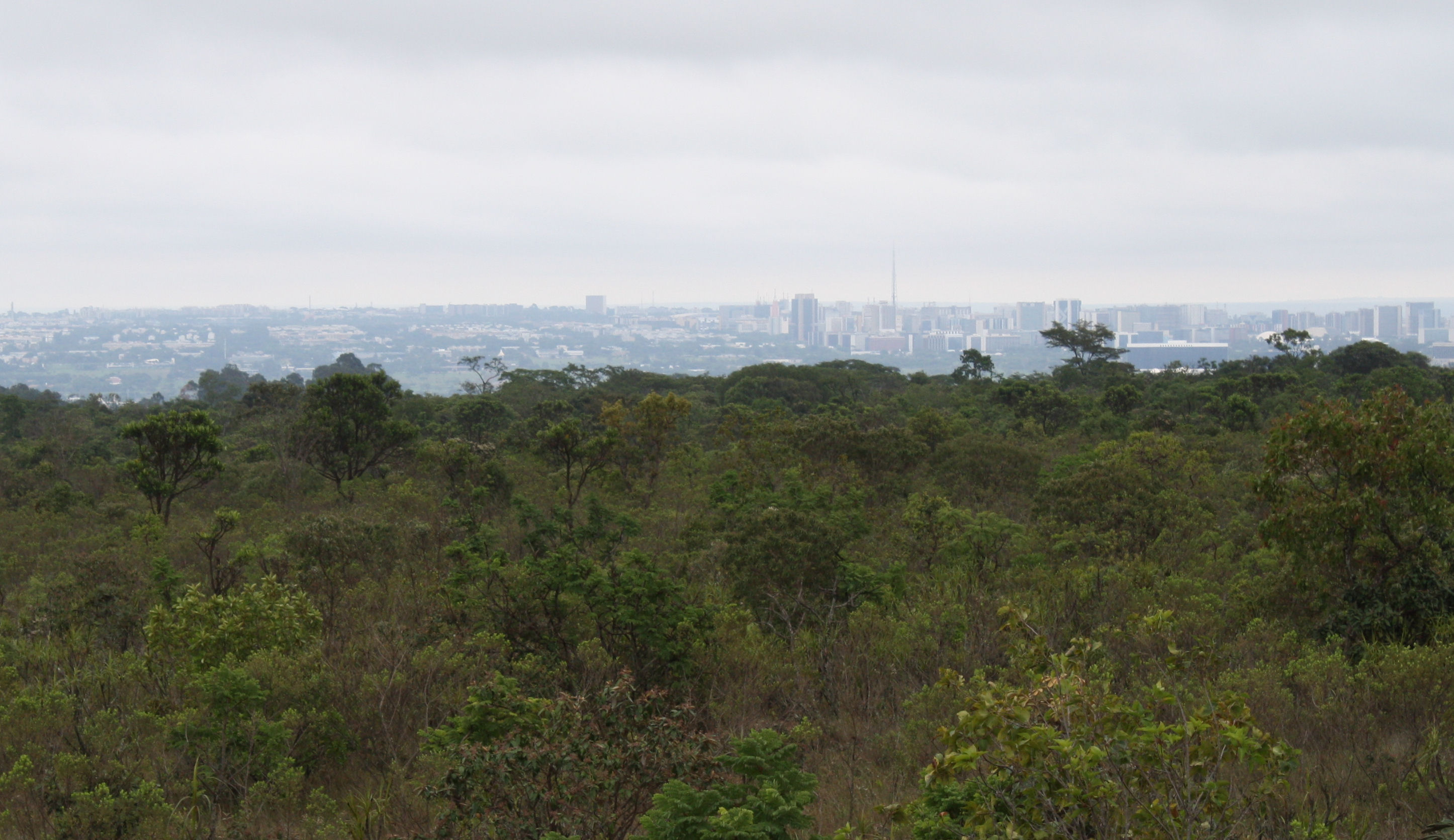 Brasilia from the botanical garden