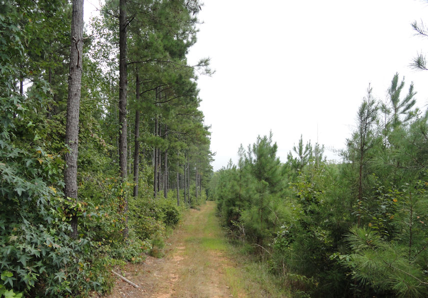 Border between forests in NF