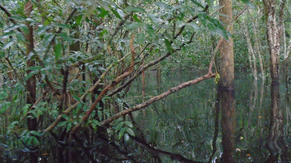 http://johnsonmatel.com/2014/May/Amazon1/flooded_forest.jpg